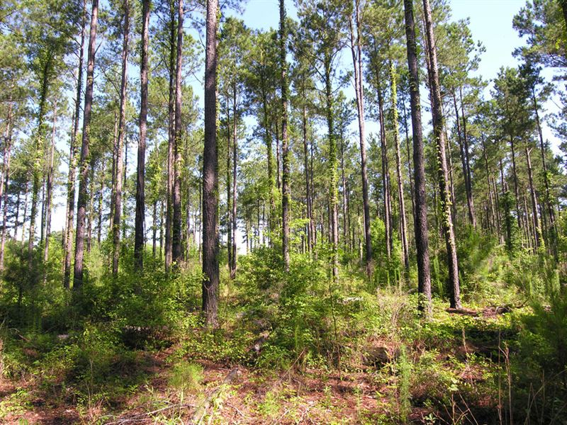34.6 Acres Wooded : Midville : Burke County : Georgia