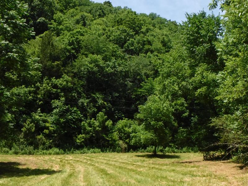 161 Acres In Jackson County : Gainesboro : Jackson County : Tennessee