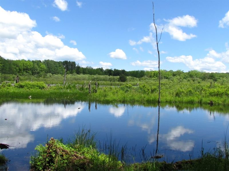 157 Acres Hunting And Timberland : Taylor : Cortland County : New York