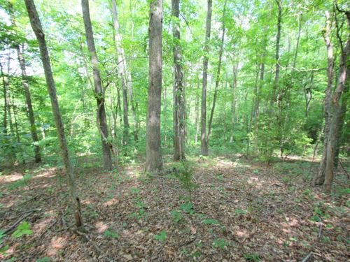 All Wooded 40 Acre Parcel : Bowling Green : Caroline County : Virginia