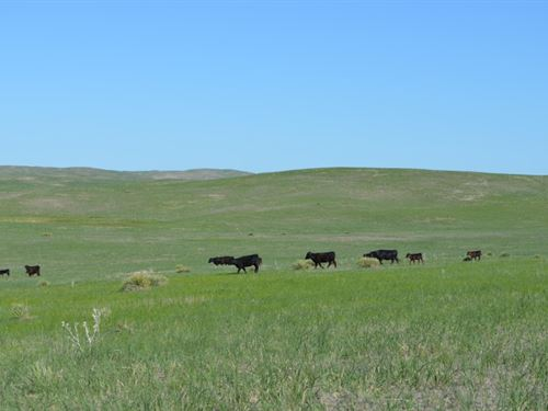 Mule Shoe Bar Beck Ranch : Alliance : Garden County : Nebraska