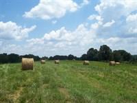 Multi-Use Land : Maysville : Jackson County : Georgia