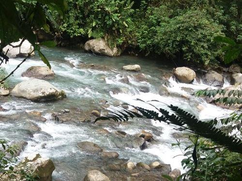 262 Wooded Wonderland W/ 2 Rivers : Pejibaye De Turrialba : Costa Rica