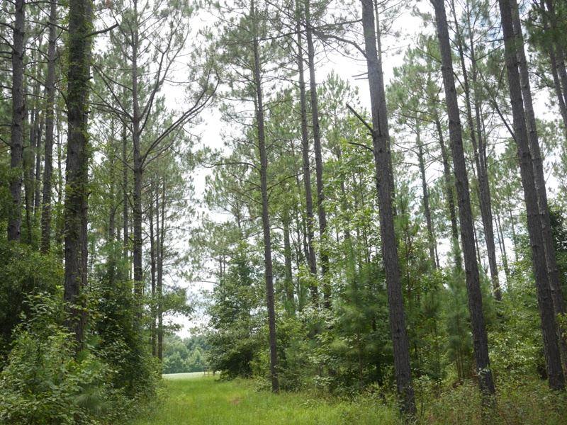 Shady Oaks : Brooklet : Bulloch County : Georgia