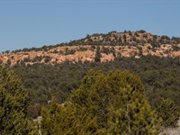 Homesite With Power, Access & Trees : Ramah : Cibola County : New Mexico