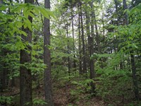 Northfield Hills Forest : Northfield : Washington County : Vermont