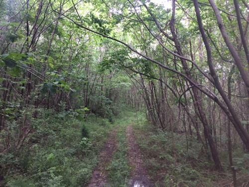 85.5+/-Acres Beautiful Mtn, Land : South Pittsburg : Marion County : Tennessee
