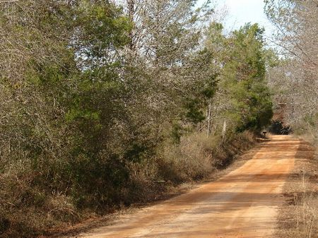 70 Acres Of Hunting Property : Dadeville : Tallapoosa County : Alabama