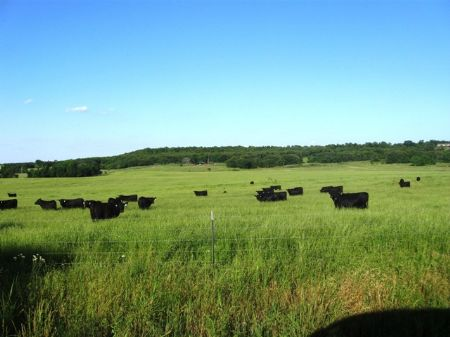 Stunning Cattle Ranch (3259 Acres) : Centrahoma : Coal County : Oklahoma