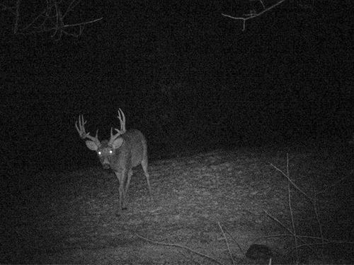Big Buck Mecca In Southwestern Wi : Viola : Richland County : Wisconsin