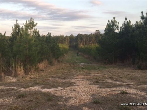 709 Ac - Timberland & Hunting : Woodville : Tyler County : Texas