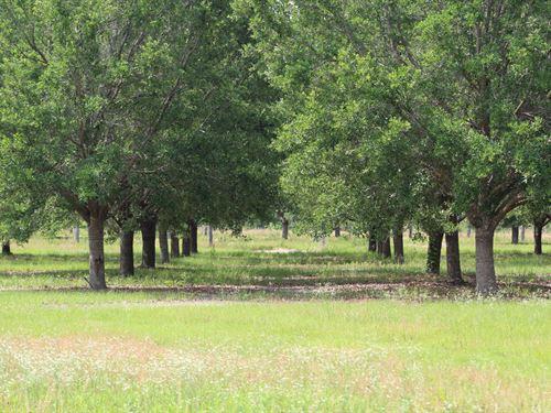 McMillan Tree Farm Tract 4 : Ehrhardt : Bamberg County : South Carolina