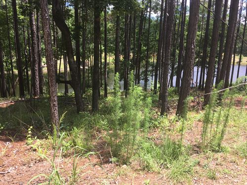 Gorgeous Recreational Land & Ponds : Milledgeville : Hancock County : Georgia