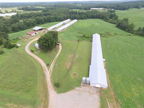 Three House Broiler & Cattle Farm : Vinemont : Cullman County : Alabama