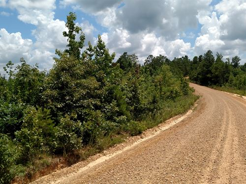 360 Acres Of Hunting Land : Bellefontaine : Webster County : Mississippi