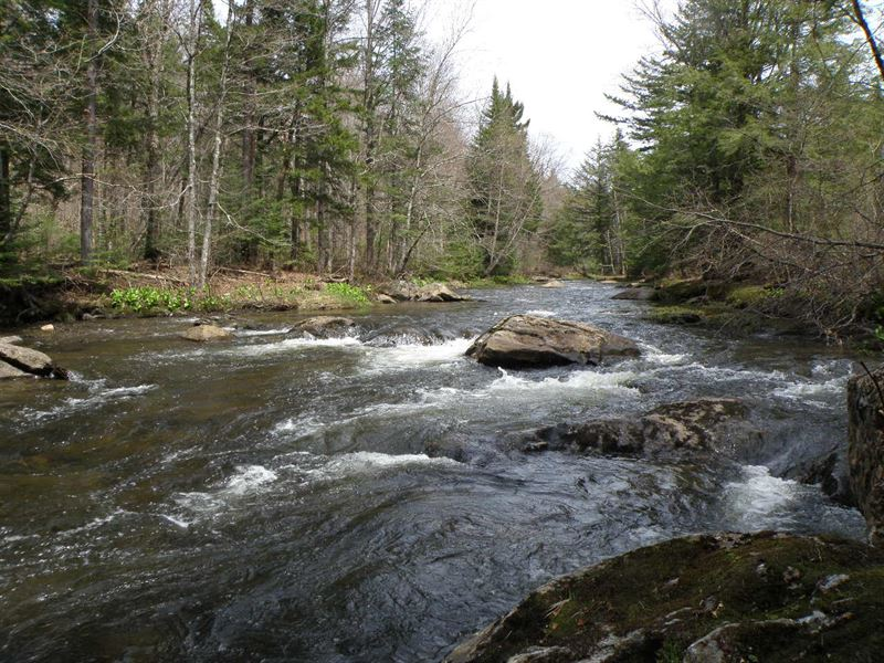 North Lamoille Forest : Belvidere Center : Lamoille County : Vermont