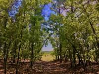 Land Developers Horse Farm Homesite : Camden : Kershaw County : South Carolina