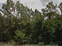 Citrus County, Fl $120,999 Neg : Beverly Hills : Citrus County : Florida