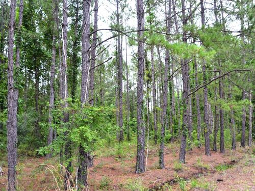 Pinehatchee North Hunting Tract : Mayo : Lafayette County : Florida