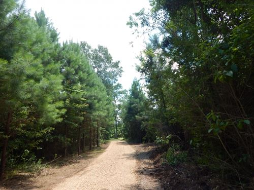 67.28 Acres Old Hwy 24 : McComb : Pike County : Mississippi