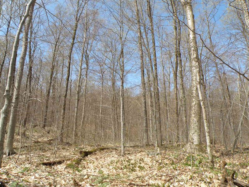 Harris Trust Forest : Belvidere Center : Lamoille County : Vermont