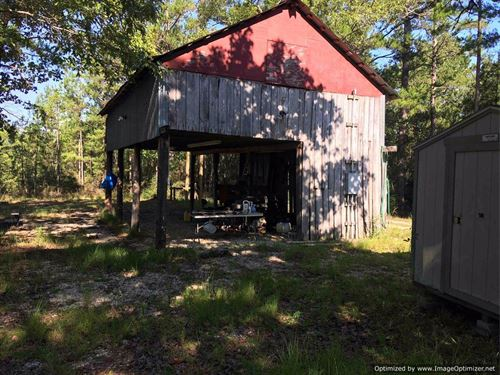 Prime Hunting Land In South Ms : Poplarville : Pearl River County : Mississippi
