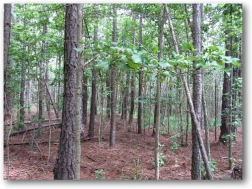 36 Acres In Choctaw County : Ackerman : Choctaw County : Mississippi