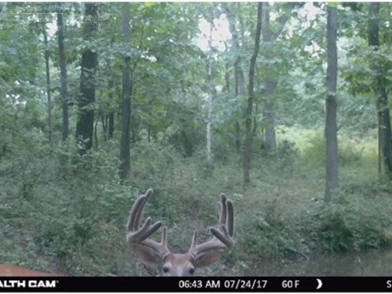 Trophy Whitetail Land On A Dead-End : Genoa : Vernon County : Wisconsin