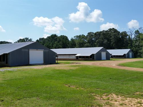 Three House Pullet Farm : Carthage : Leake County : Mississippi