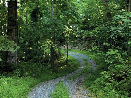 Land Auction 415 Ac Of Timberland : Bedford : Virginia