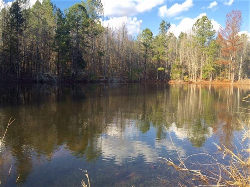 Beautiful Timber Tract : Perry : Houston County : Georgia