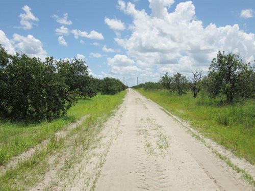 Sears Grove : Labelle : Hendry County : Florida