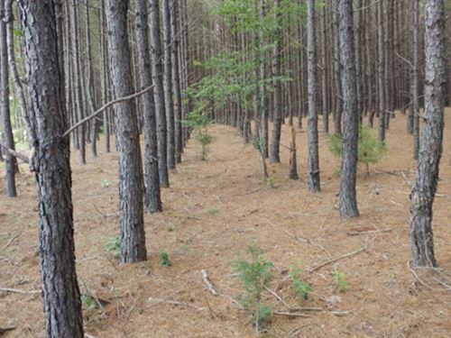 Bible Camp Road : Byron : Peach County : Georgia