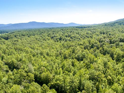 314 Acres On The Cumberland Plateau : Wartburg : Morgan County : Tennessee
