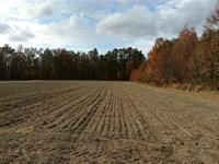 225 Ac Duck Hunter Special : Hemingway : Williamsburg County : South Carolina