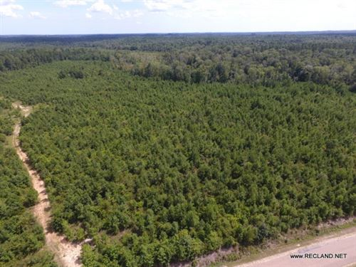 60 Ac - Timberland For Rural Home : Calhoun : Ouachita Parish : Louisiana