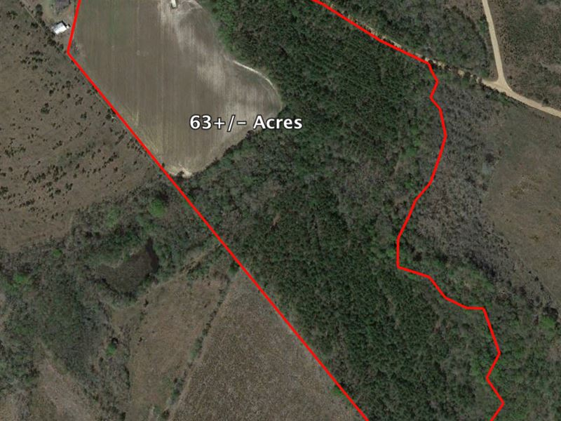 Fantastic Hunting And Timber Tract : Metter : Candler County : Georgia