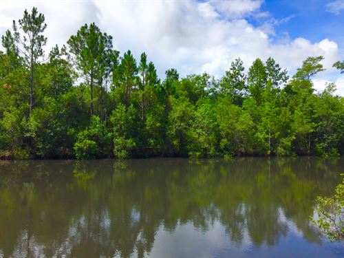 Hunting/Timber With Pond Near Coast : Carrabelle : Franklin County : Florida