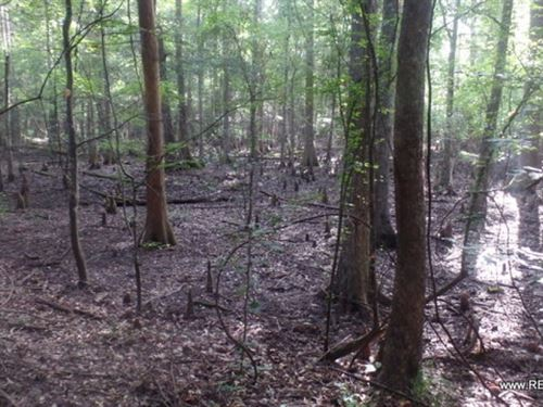 50 Ac, Timberland Along The Angeli : Jasper : Texas