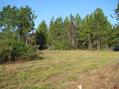 39 Acres Of Timberland On Snyder Rd : Frisco City : Monroe County : Alabama