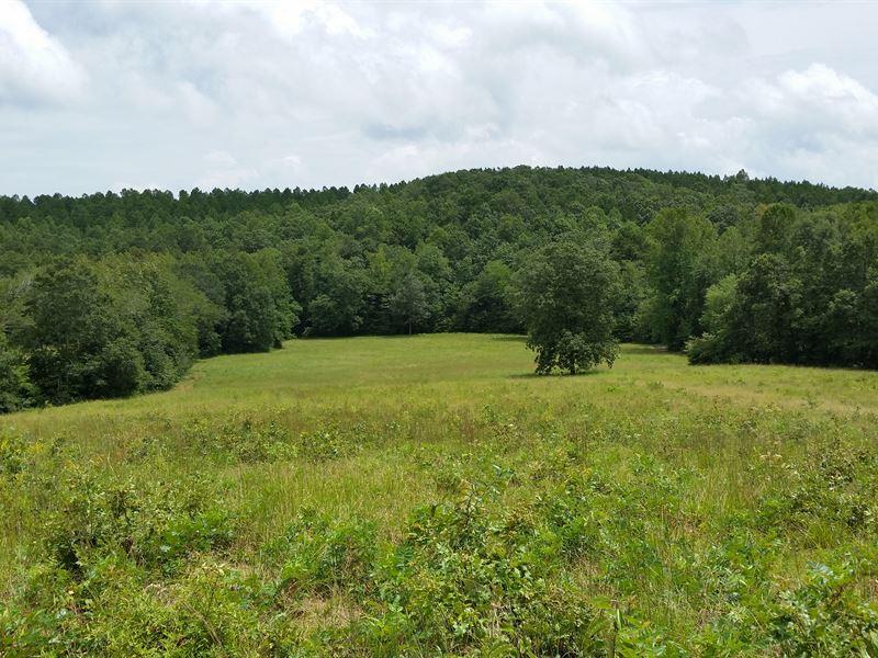 Open Land For Sale 54+/- Acres : Buchanan : Haralson County : Georgia
