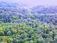 Merch Hardwood Timber Investment : Gandeeville : Roane County : West Virginia
