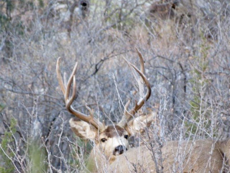 Miranda's Sheep Pen Ranch : Kim : Las Animas County : Colorado