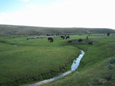 Long Hollow Creek Ranch : Meeteetse : Park County : Wyoming