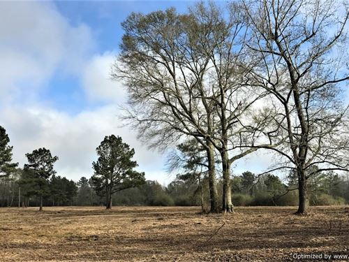 Sweet Family Farm Opportunity : Jayess : Walthall County : Mississippi
