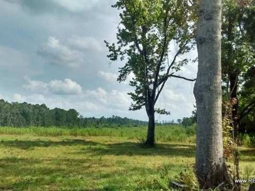 111 Ac, Pasture-Ready Tract Near : Weston : Jackson Parish : Louisiana