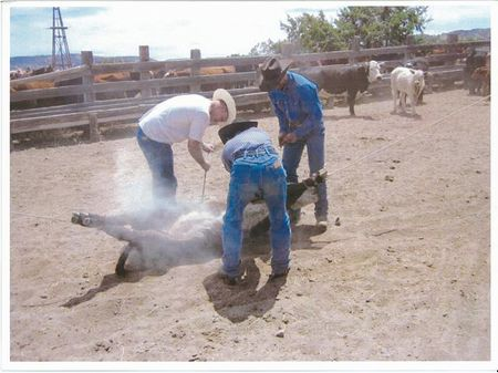 Red Cone Ranch : Quemado : Catron County : New Mexico