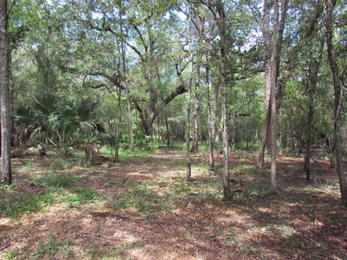 49.57 Acres Available 774334 : Old Town : Dixie County : Florida