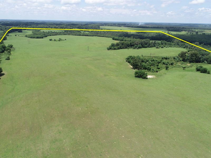 1370 Acres Cattle Farm, Timber Land : Ranch for Sale