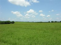 2527 Acres Cattle Farm, Timber Land : Preston : Webster County : Georgia